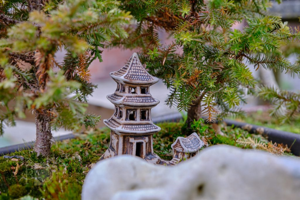 bonsai - detail