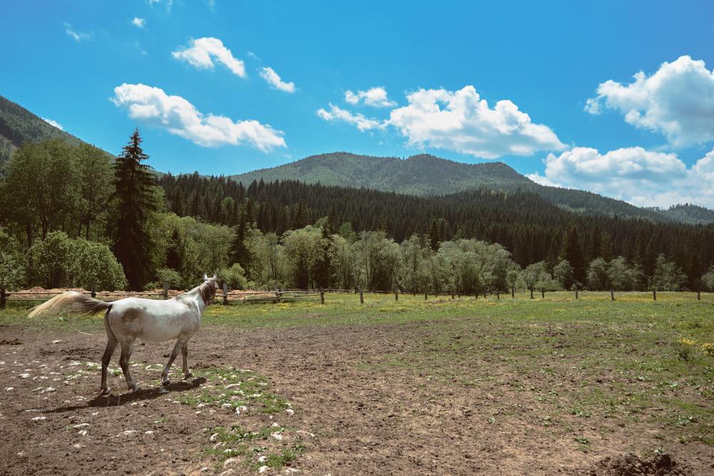 Biely kôň - foto - príroda